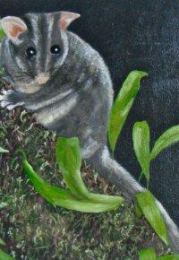 Leadbeaters Possum
